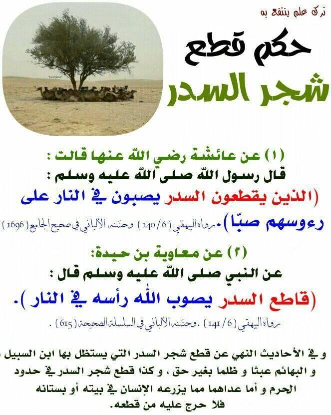 Pin By الأثر الجميل On أحاديث نبوية Ahadith Hadith Hadeeth