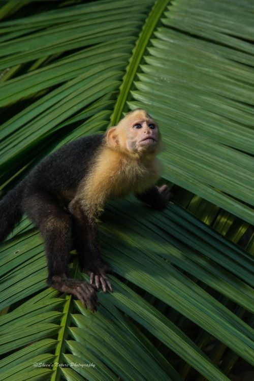 How to Select a Travel Photography Workshop: A Costa Rican Experience
