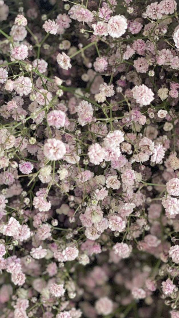 Baby Breath Flowers In 2020 Babys Breath Wedding Flowers Wholesale Flowers