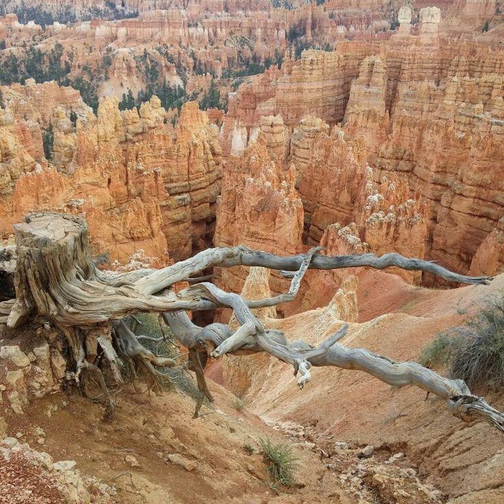 #love #travel #bryce canyon