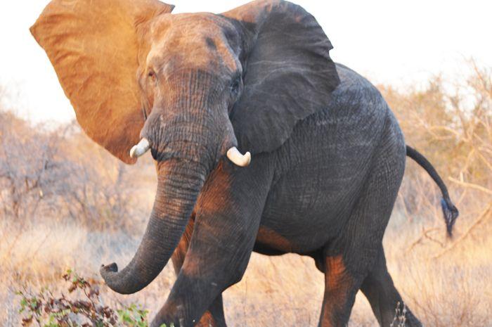 #MongenaPrivateGameReserve #Elephant #Wildlife #Nature