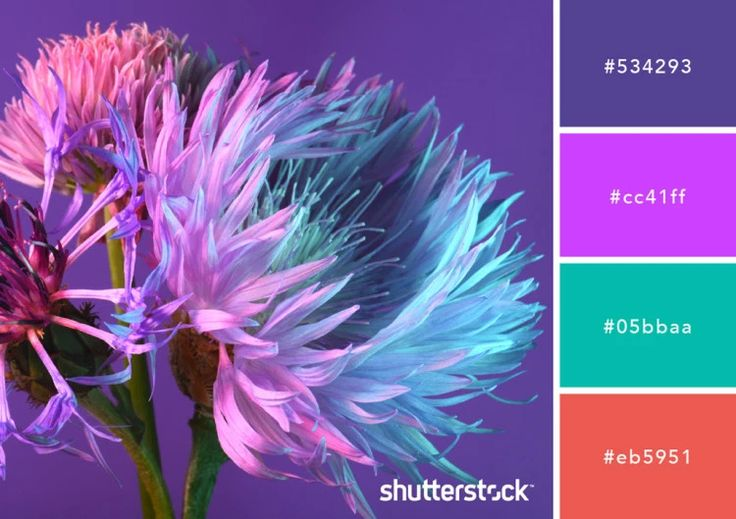 Purple Color Schemes, Design Applications, Meaning, and ...