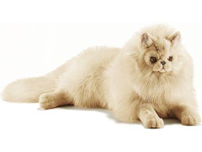 Pluche perzische kat beige 70 cm. Levensechte perzische katten knuffel van hoge kwaliteit pluche. Deze perzische kat heeft een mooie beige kleur en is ongeveer 70 cm groot.