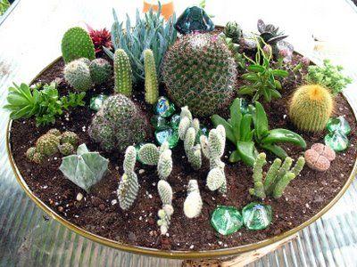 4 plante decorative în ghiveci, potrivite pentru grădină   Evenimentul