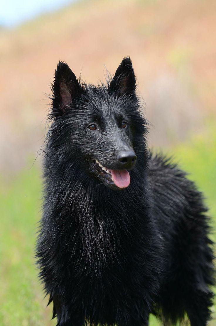 Small Crop Of Rarest Dog Breeds