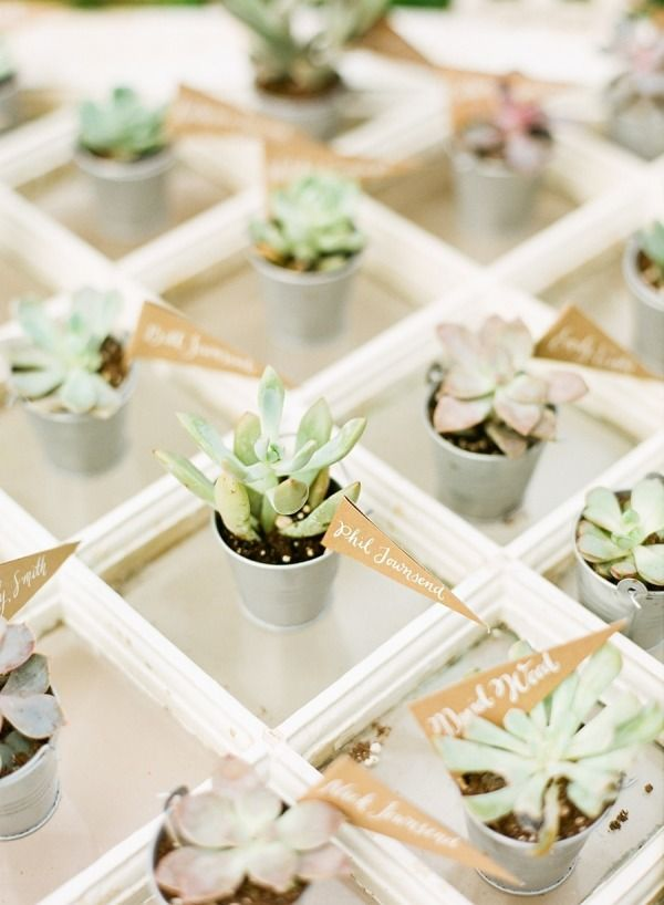 Delicate succulents are the perfect parting gifts.