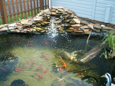 111 best images about fish and ponds on pinterest for Best fish for small backyard pond