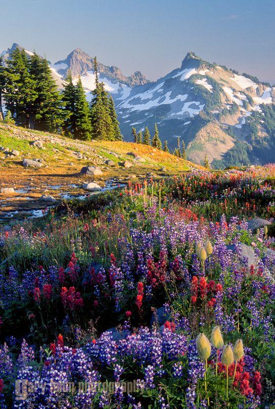 Wildflowers and Mt. Rainier along Panorama Trail