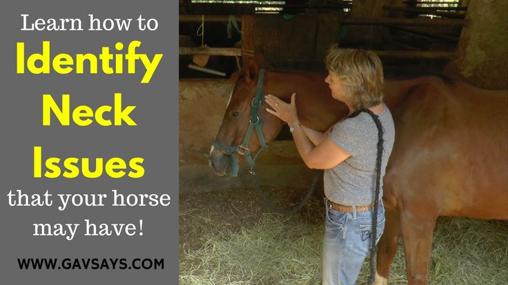 "GavSays.com: Here's a fantastic ""Horse Health"" video featuring Anna Mason on Identifying Neck Problems that your horse may have. Simple things that you can check yourself. Take a watch..."