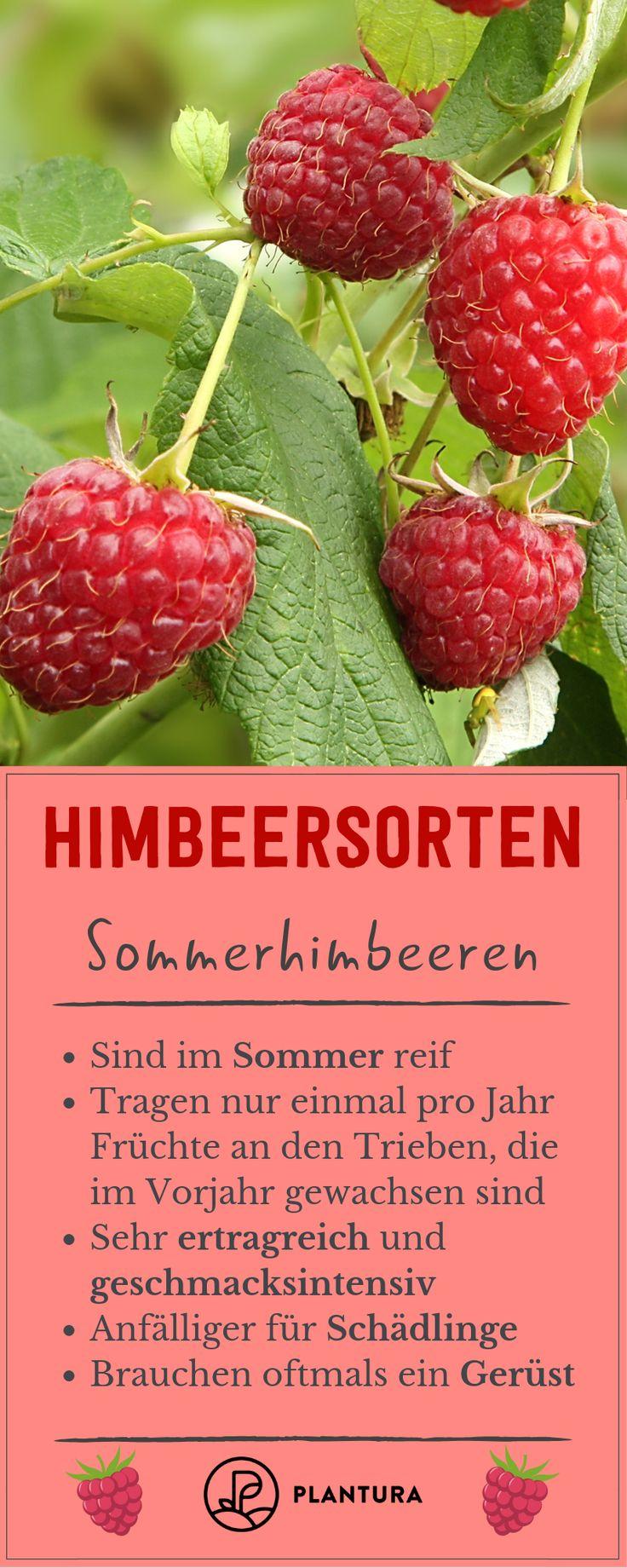 Himbeere Sorten