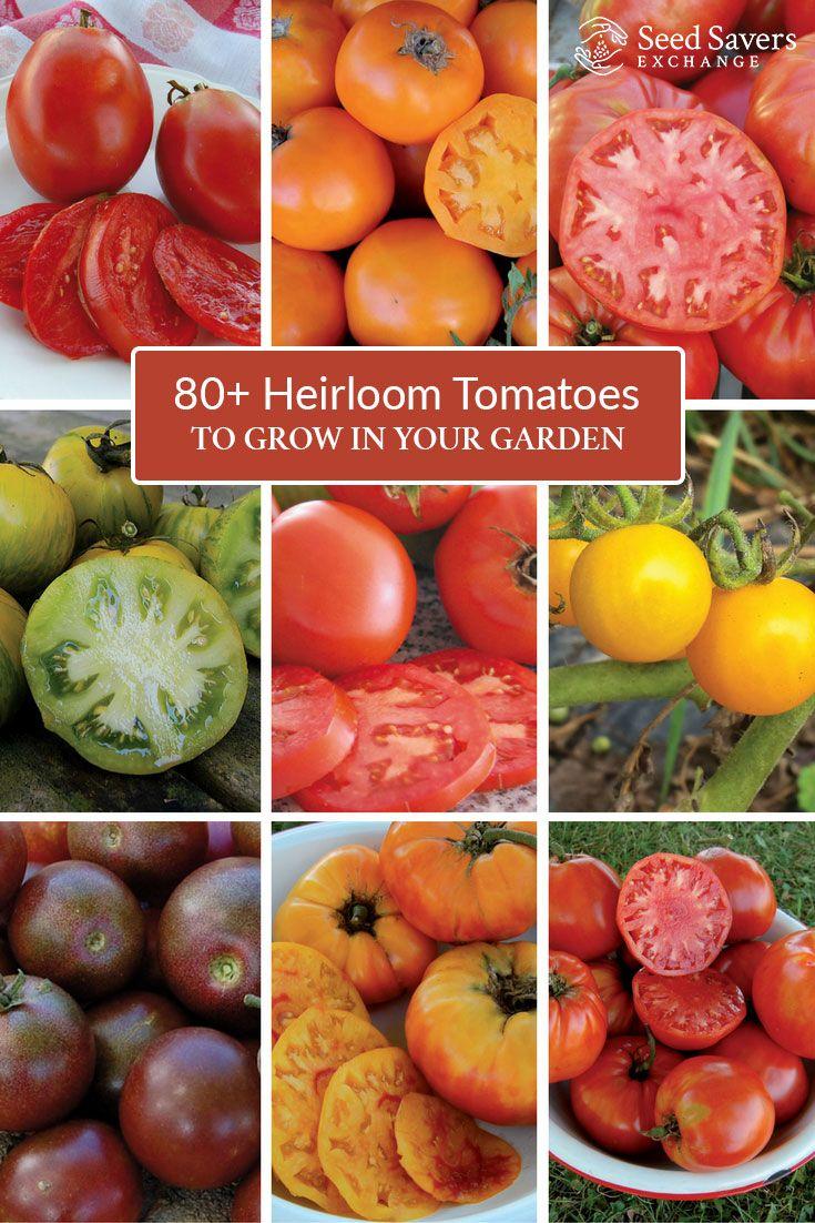 28 Best Heirloom Tomato Favorites Images On Pinterest 640 x 480