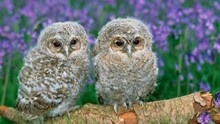 Find out how you can contribute to RSPB UK - follow the link ...   http://www.rspb.org.uk/