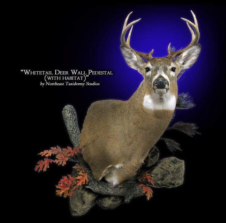 Whitetail Deer Wall Pedestal Mounts Deer Hunting Turkey
