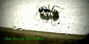 Ants Pismire College kids DearKidLoveMom.com