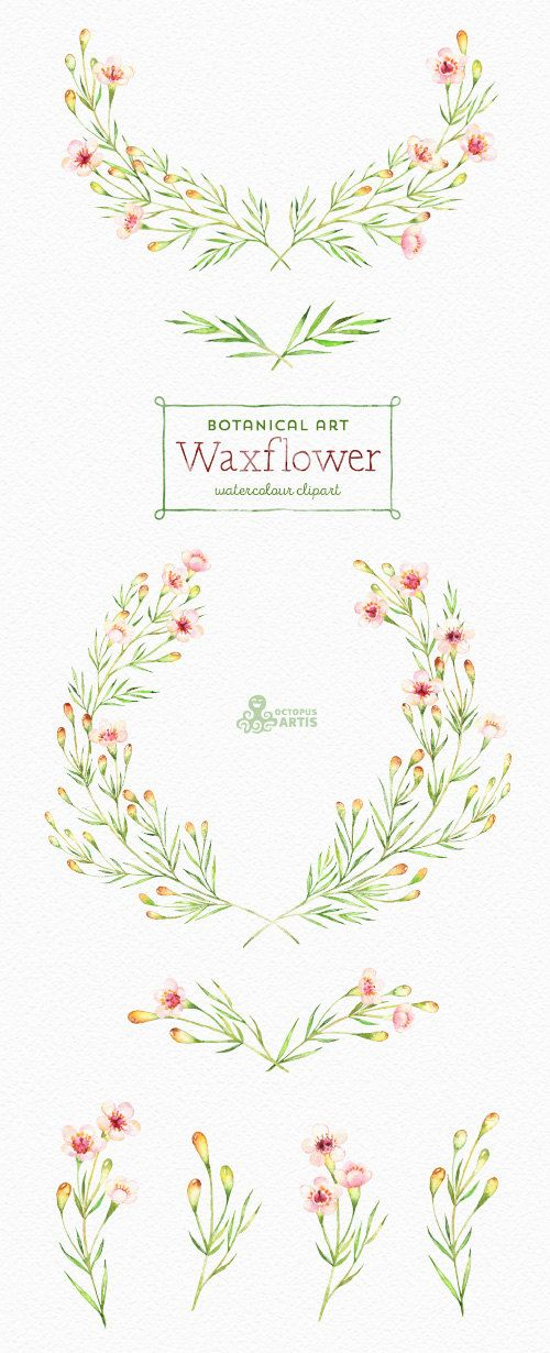The Botanical set of Waxflower(Chamelaucium) includes 24 high quality hand painted watercolor floral Images(Branch, wreath, blossom, elements, flowers). Perfect graphic for wedding invitations, greeting cards, photos, posters, quotes and more. ----------------------------------------------------------------- INSTANT DOWNLOAD Once payment is cleared, you can download your files directly from your Etsy account. ----------------------------------------------------------------- This listing ...