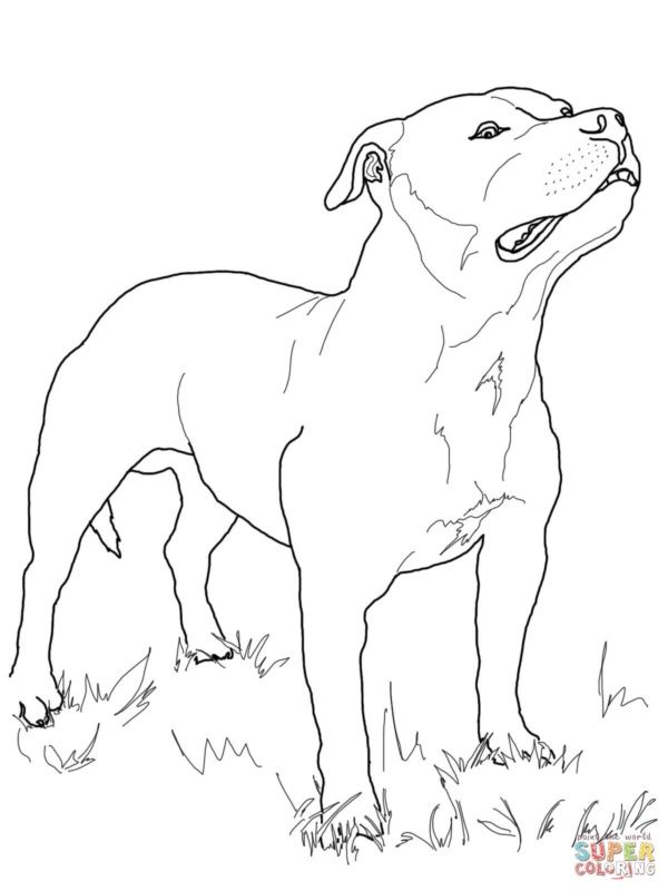 How To Draw A Pitbull Puppy Puppy Cartoon