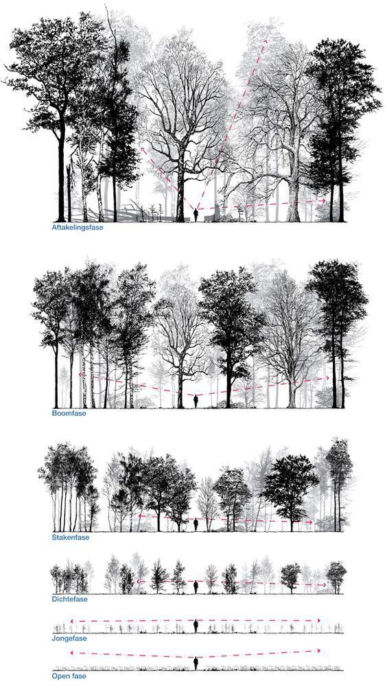 Patrick Ruijzenaars / In imagining and designing forest is frequently talked about the final stage. Equally interesting is the way to get there. It takes many human lives, indeed a lifetime, for them to mature and a young forest is often the least interesting. This series of drawings shows the experiential value of planted forest in different stages of the forest. By manipulating the planting method the experiential value will be increased, by structural variation, which makes the forest…