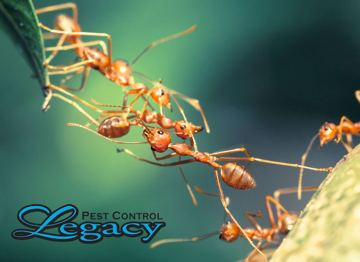 Ants are the #1 pest in the United States. Check out these tips to keep them out of your home.