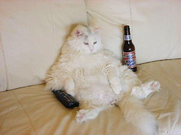 Crazy Fat Cat 53