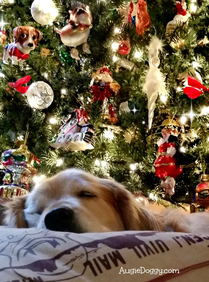 Christmas dreamin' :)