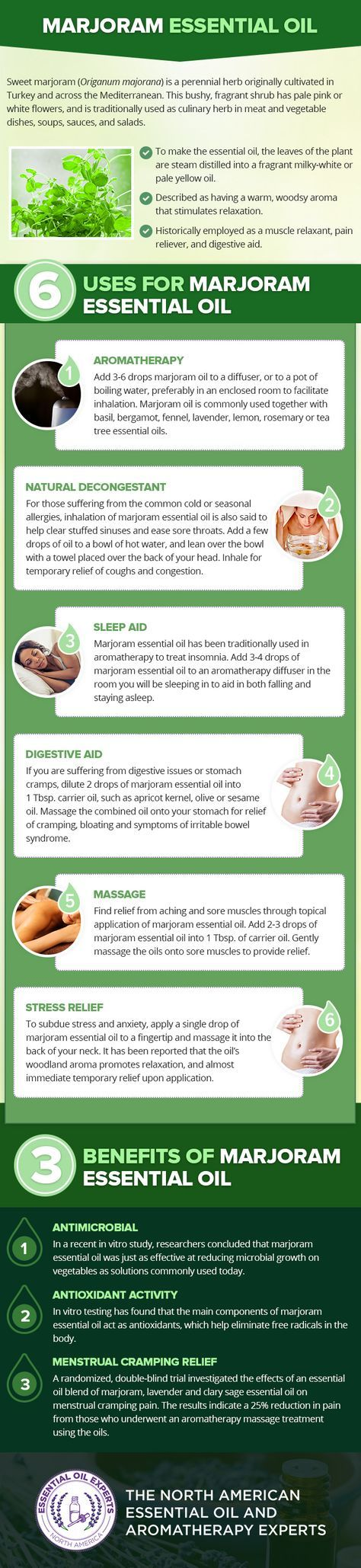 Marjoram Essential Oil Uses & Benefits