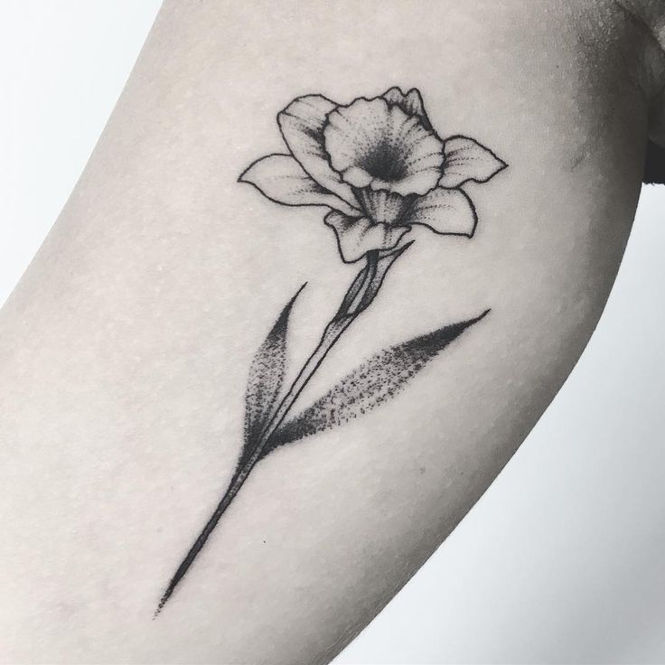 "125 Likes, 1 Comments - ✣Lauren Shaw✣ (@laurenshawtattoo) on Instagram: ""DAFFY  • • #tattoo #tattooist #tattoos #flower #flowertattoo #floral #floraltattoo #daffodil…"""