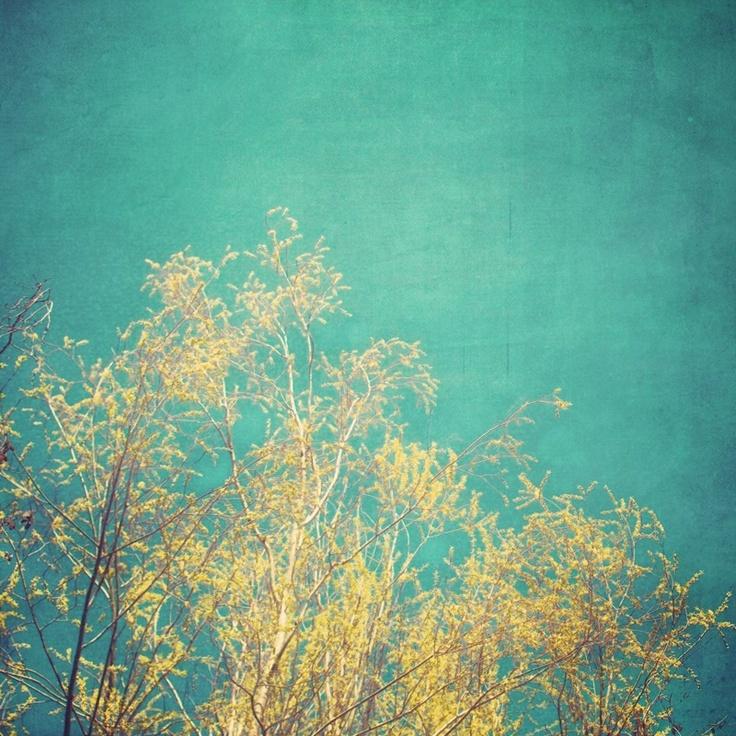 Vibrant Treetop Fine Art Photograph - turquoise teal ...