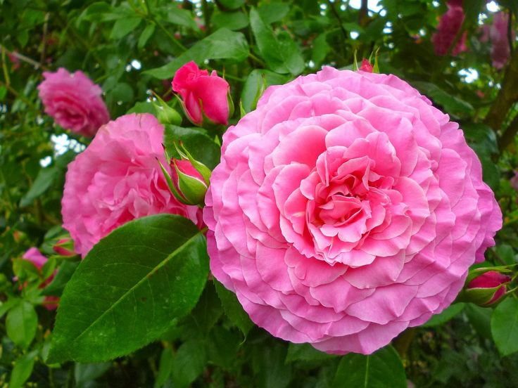 Lovely pink roses and a post on writing. Read more!