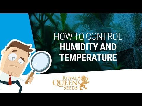 Indoor Cannabis Growing: Relative Humidity and Temperatures - Royal Queen Seeds - RQS Blog