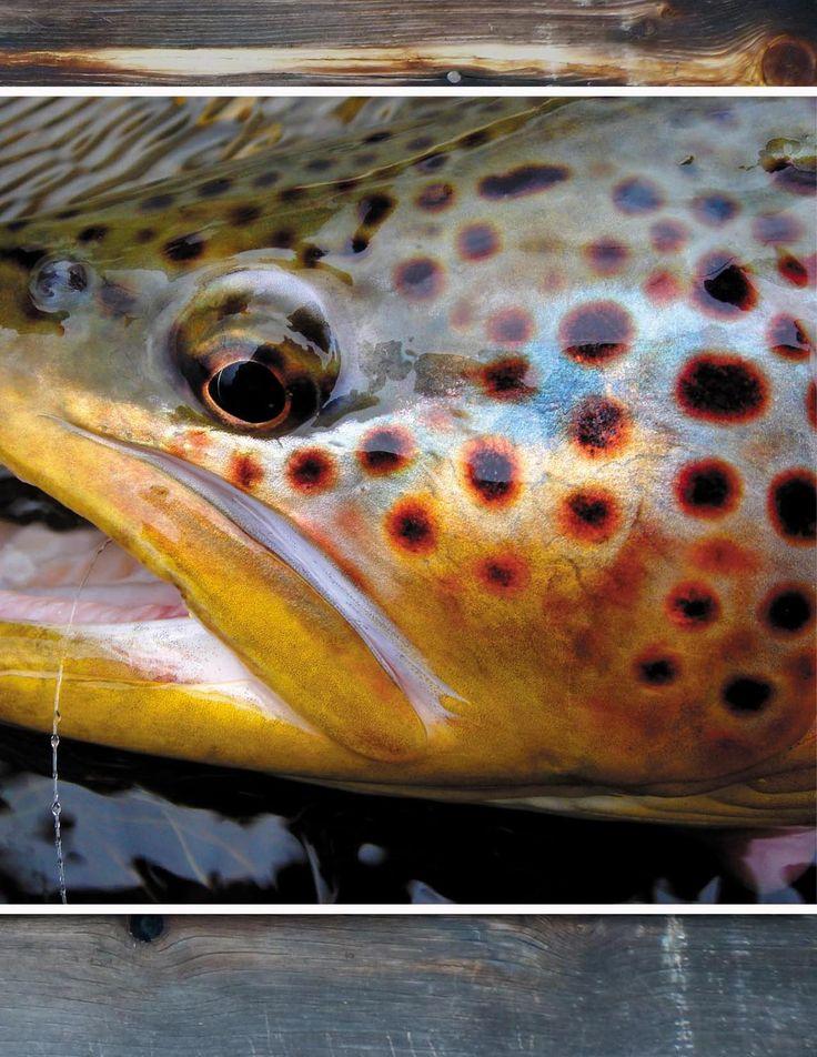 Montana Fly Fishing Magazine August-September 2012