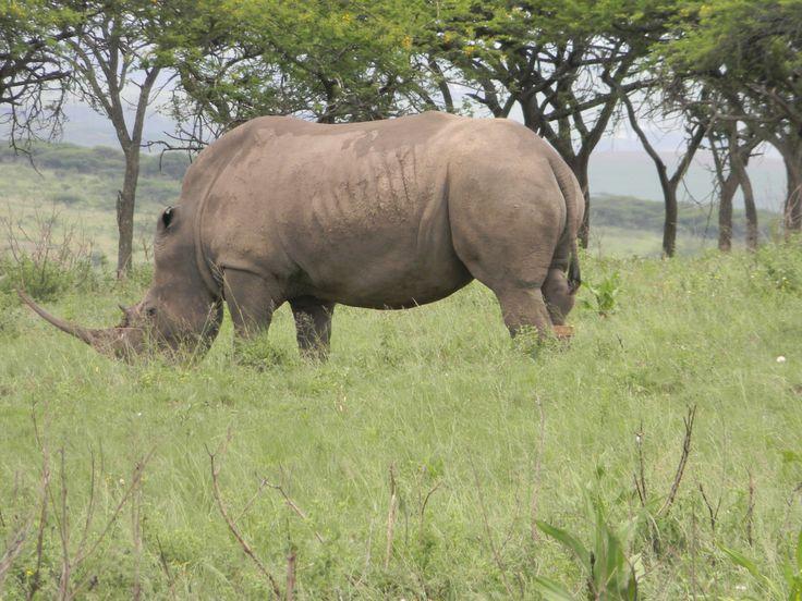 Tala Game Reserve Kwa-Zulu Natal South Africa