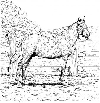1000 Images About Horse Drawings On Pinterest