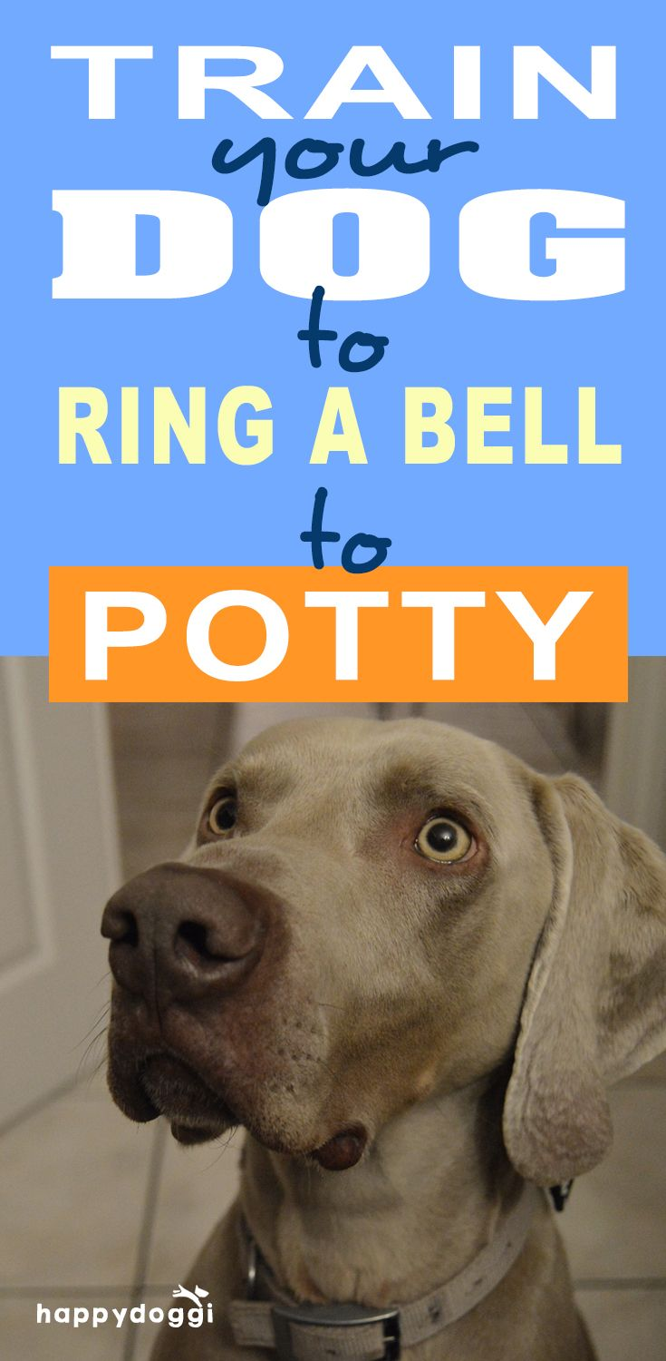 How To Train Your Dog To Ring A Bell To Potty Training Your Dog