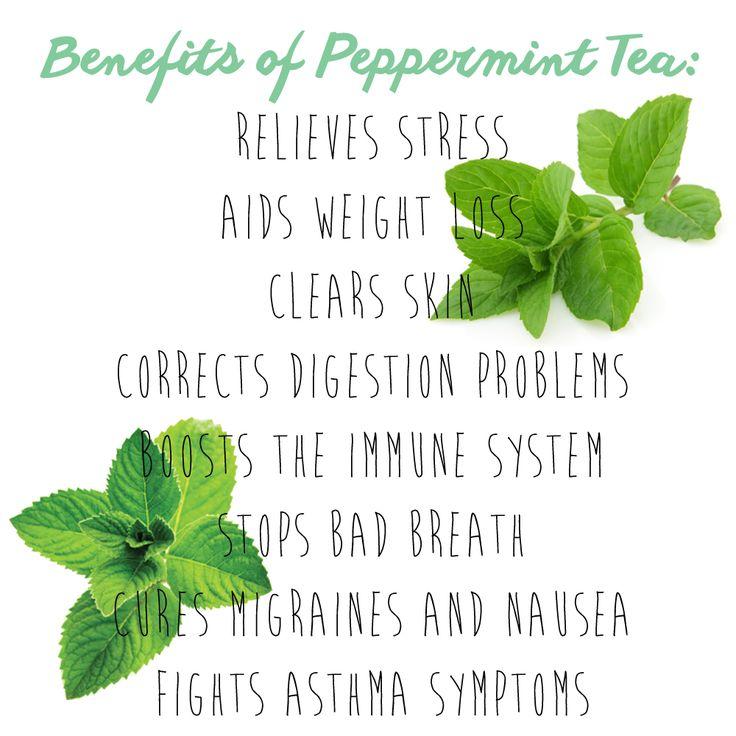 Benefits of peppermint tea! #peppermint #tea