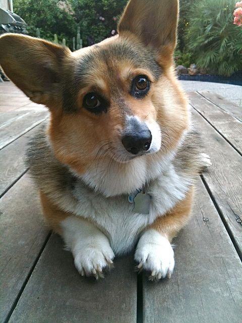 """""""It is more fun to talk with someone who doesn't use long, difficult words but rather short, easy words like """"What about lunch?"""" ― A.A. Milne, Winnie-the-Pooh  