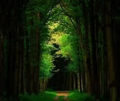 Image result for dark green forest