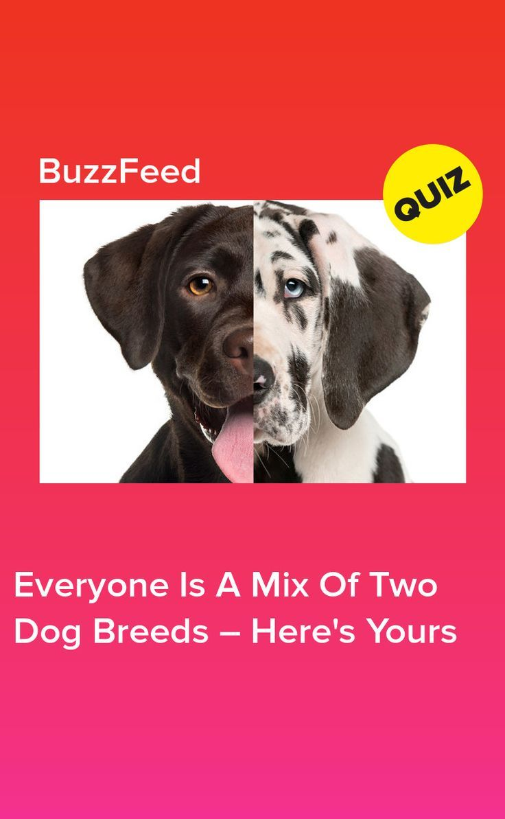 Everyone Is A Mix Of Two Dog Breeds Here S Yours Dogs Two
