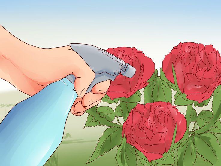 Los insecticidas naturales son menos tóxicos para los seres humanos y los animales domésticos, además de ser más seguros para el medio ambiente. La forma más simple de hacer un insecticida casero es combinar agua y jabón líquido. También se...