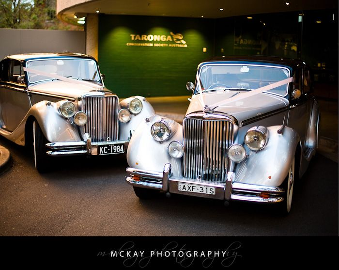 Wedding cars at the Taronga Centre