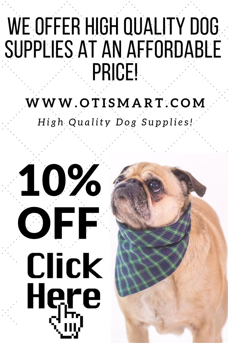 Cheap High Quality Dog Supplies And Training Products All