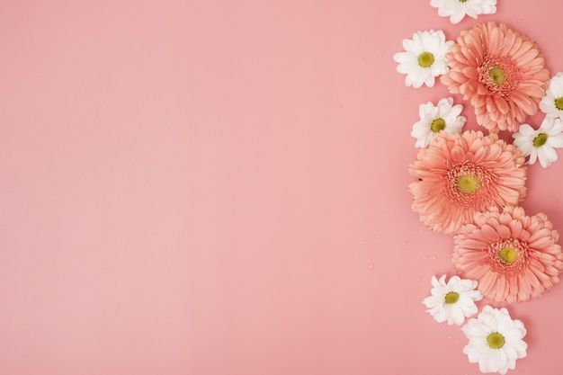 Pink Background With Daisies And Gerbera Free Photo Freepik Freephoto Flower Floral F Flower Phone Wallpaper Pink Background Wallpaper Nature Flowers