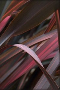 phormiumColours Inspiration, Green Thumb, Inspiration Beautiful, Acrylics Inspiration, Green Fingers, Front Yards, Colours 365, Yards Gardens, Gardens Pl