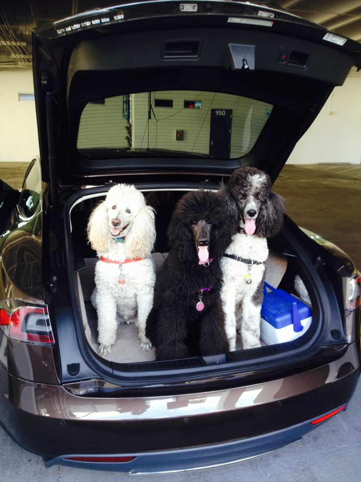 17 Best Images About Dogs In Tesla Model S On Pinterest
