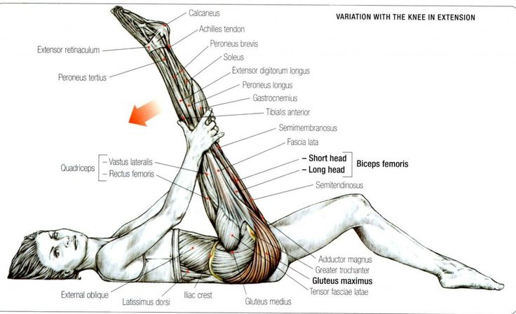 Stretching: How to Stretch the Gluteus Maximus Exercise 2