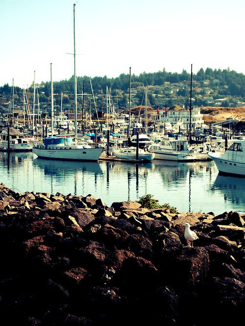 452 best images about fishing on pinterest discovery for Fishing in portland oregon