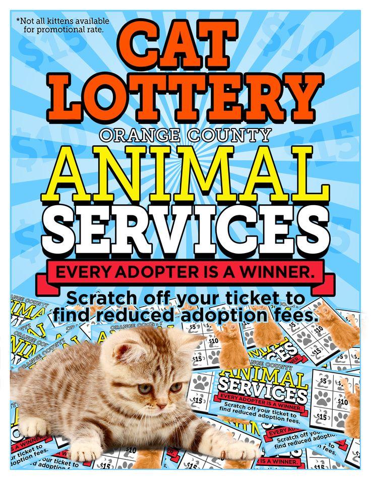 Animal Shelter Adoption Promotions November Animal