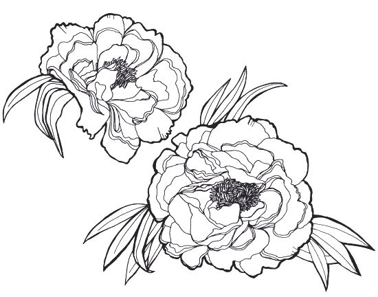Contour Line Drawing App : Peony tattoo outline google search k pinterest