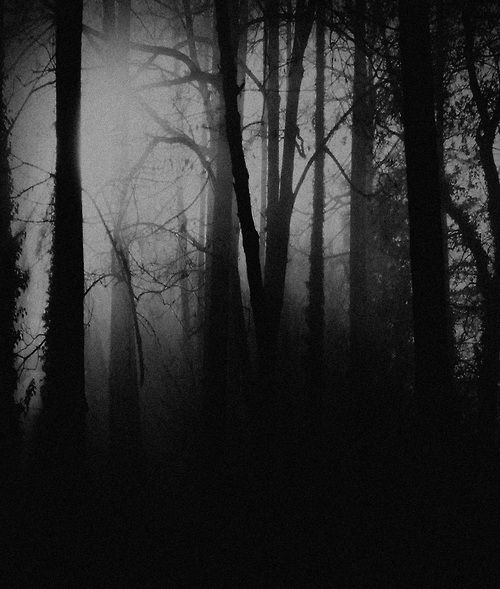 nature trees dark forest - photo #29