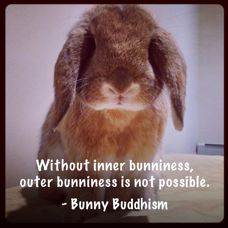 Without inner bunniness, outer bunniness is not possible. - Bunny Buddhism