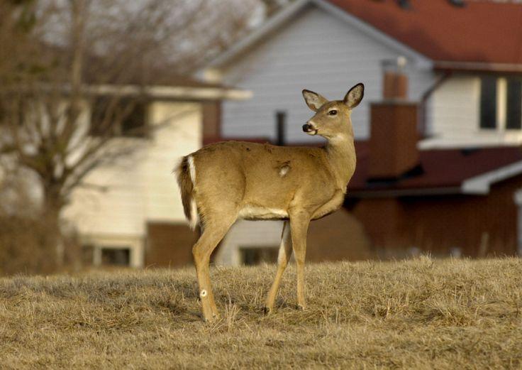 deer hunting cartoon in 2020  jagd ausmalen bilder